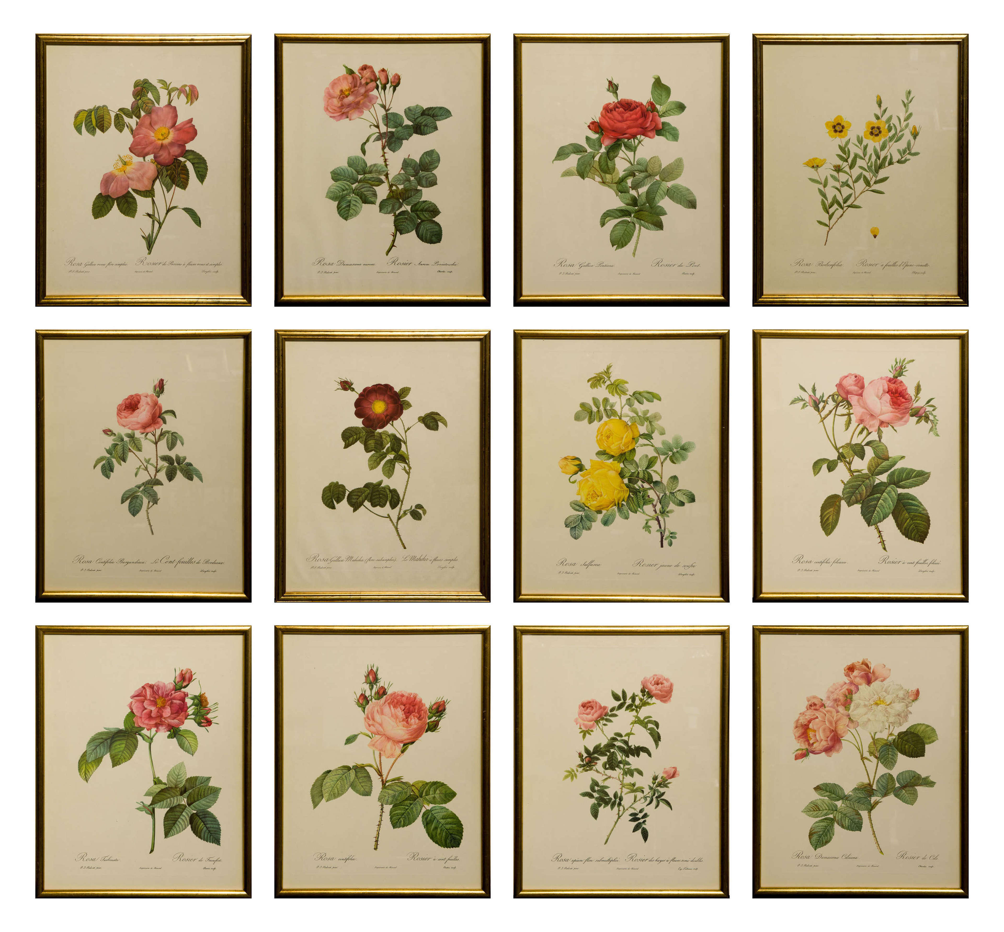 Set of 12 1950's rose lithographs in later gilt frames